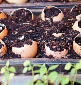 8 Uses For Eggshells In The Garden