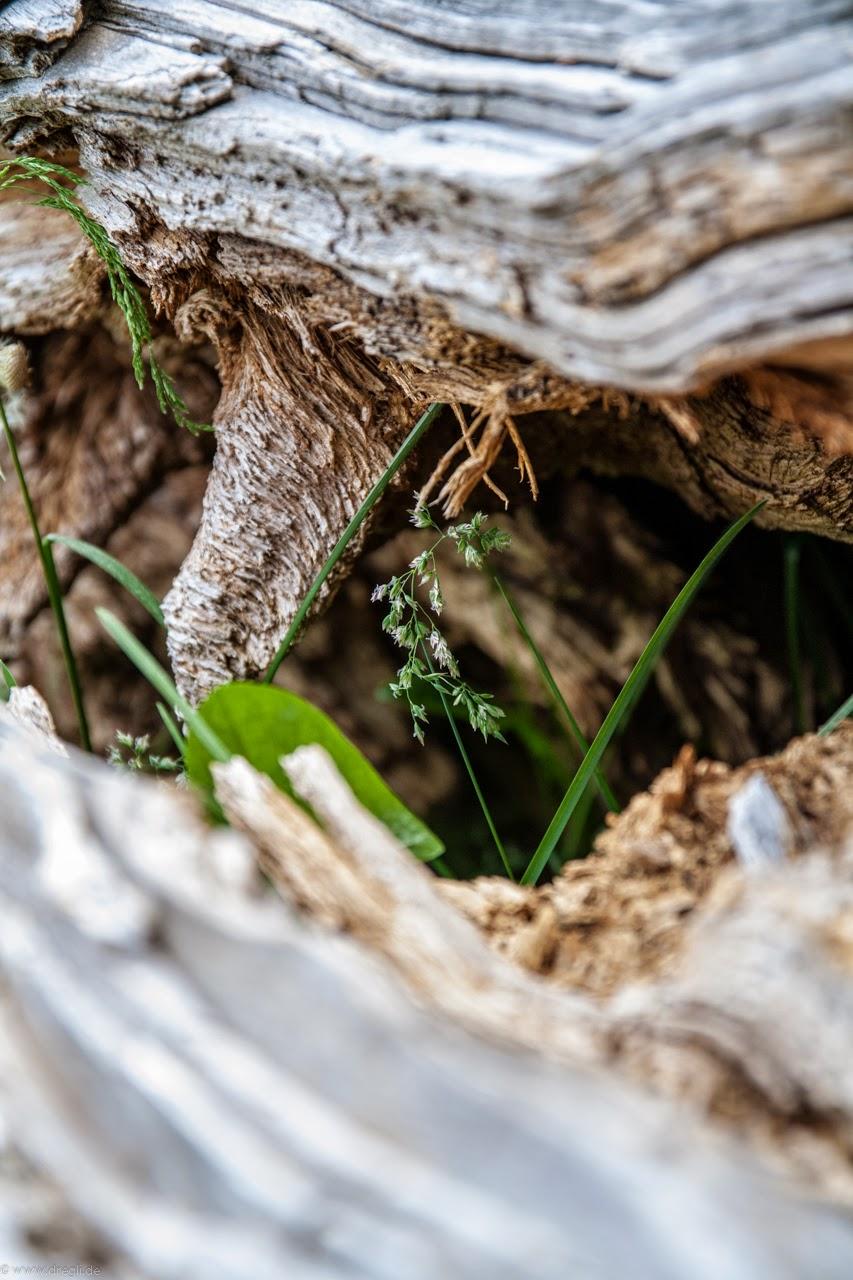 Natur hautnah 9