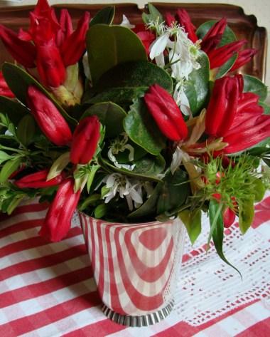 red azalea on my kitchen table