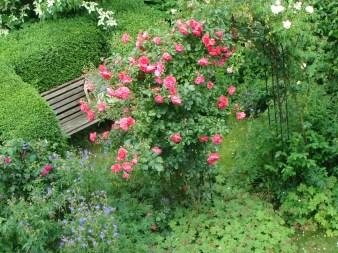 """Rose arch with """"Rosarium Uetersen"""""""