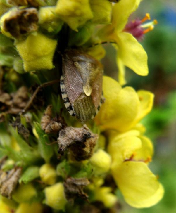 bug amidst yellow