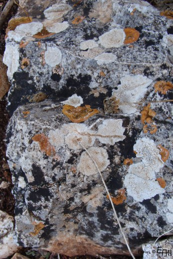 old stones with lichen look like a modern painting