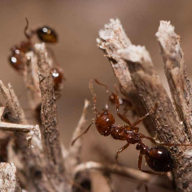 Do You Need To Get Rid Of Ants In Your Home This Simple Solution Is