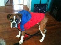 Boxer Dog Coat Photo - 1 | Dress The Dog - clothes for ...