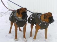 Dog Coat For Boxer | Dress The Dog - clothes for your pets!