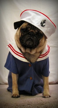 Pugs Clothes | Dress The Dog - clothes for your pets!