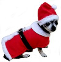 Christmas Outfits For Small Dogs   Dress The Dog - clothes ...