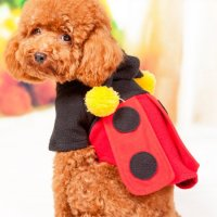 Cute Dog Clothes For Small Dogs | Dress The Dog - clothes ...