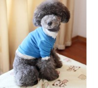 Dog Outfits For Small Dogs   Dress The Dog - clothes for ...