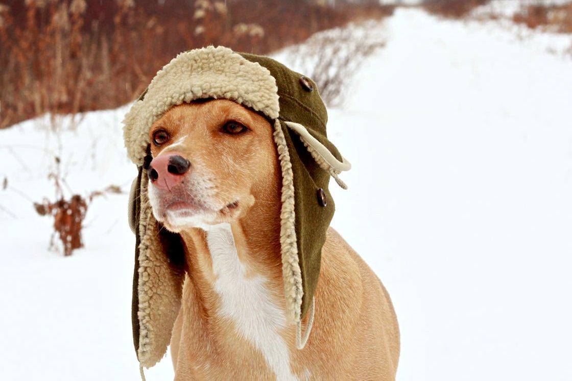 Dog Winter Hats