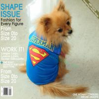 Small Dog Outfits Cheap | Dress The Dog - clothes for your ...
