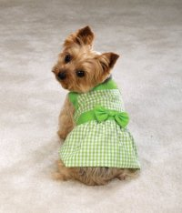 Toy Breed Dog Clothes | Dress The Dog - clothes for your pets!