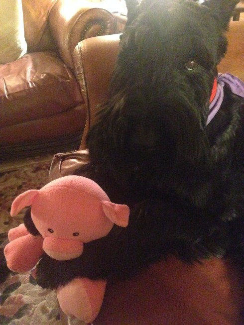 maxie and her pig