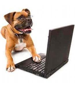administratif-dresser-son-chien