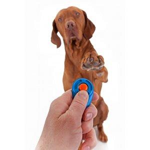 Comment dresser son<br /> chien au clicker ?