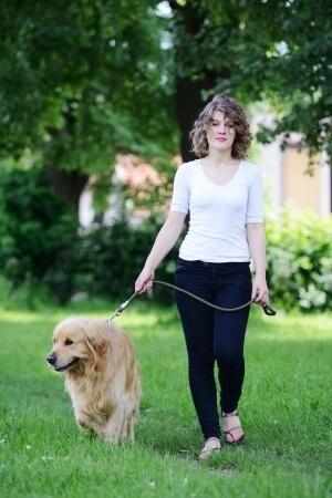 Mon Chien Tire En Laisse : chien, laisse, Chien, Laisse, Faire, Solutions...