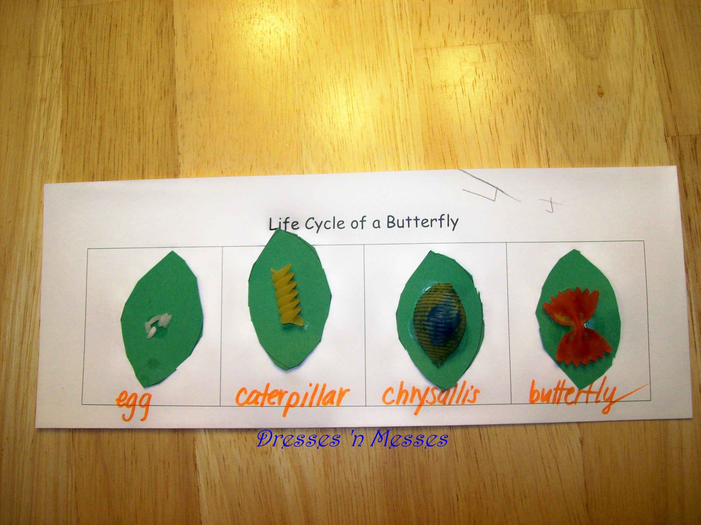 Blast From The Past Pasta Butterfly Lifecycle
