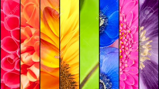 Rainbow collage of red orange yellow green blue pink violet purple colors of Dahlia Sunflower Fern leaf Anemone Windflower Gerbera and Poppy flowers in closeup separated with black strips
