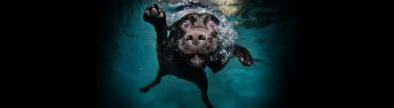 Amazing-Images-of-Dogs-Underwater-hero