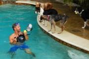 Underwater dogs_008