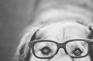Dog Portraits That Will Take Your Breath Away 010