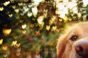 Dog Portraits That Will Take Your Breath Away 020
