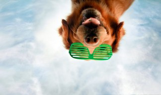 Dog Portraits That Will Take Your Breath Away 031
