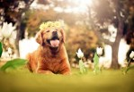 Dog Portraits That Will Take Your Breath Away 036