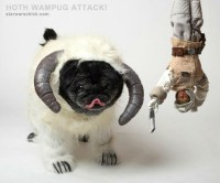Pugs Dressed as Movie Characters for Halloween [Photos ...