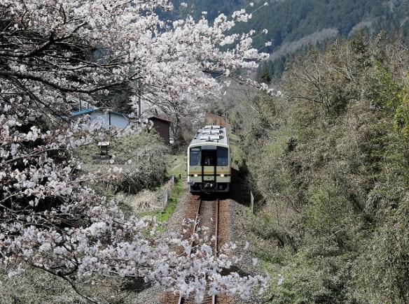 三江線最後の1日-2/2018.04.05/Posted by 893-2