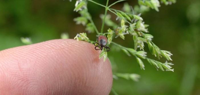 Lyme Disease & Tick-Borne Diseases