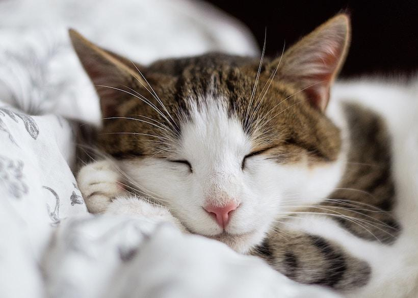 9 Reasons Why You Must Focus on Getting Quality Sleep