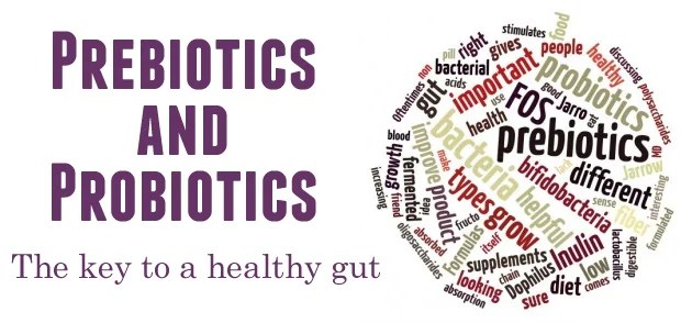 Best Probiotics To Take When You Have SIBO and When To Introduce Them 1