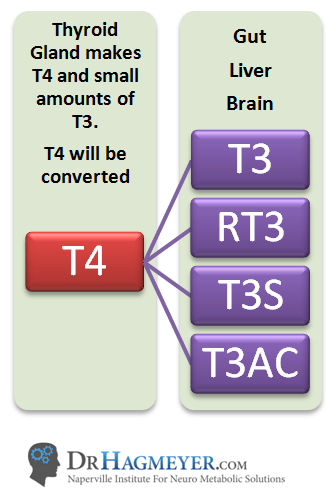 Image result for T4 to T3 conversion takes place in the liver