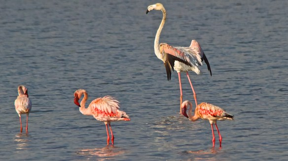 flamingoes bhandup (1)