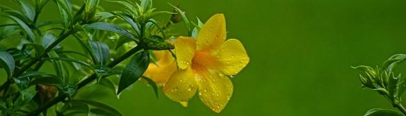 droplets on flower