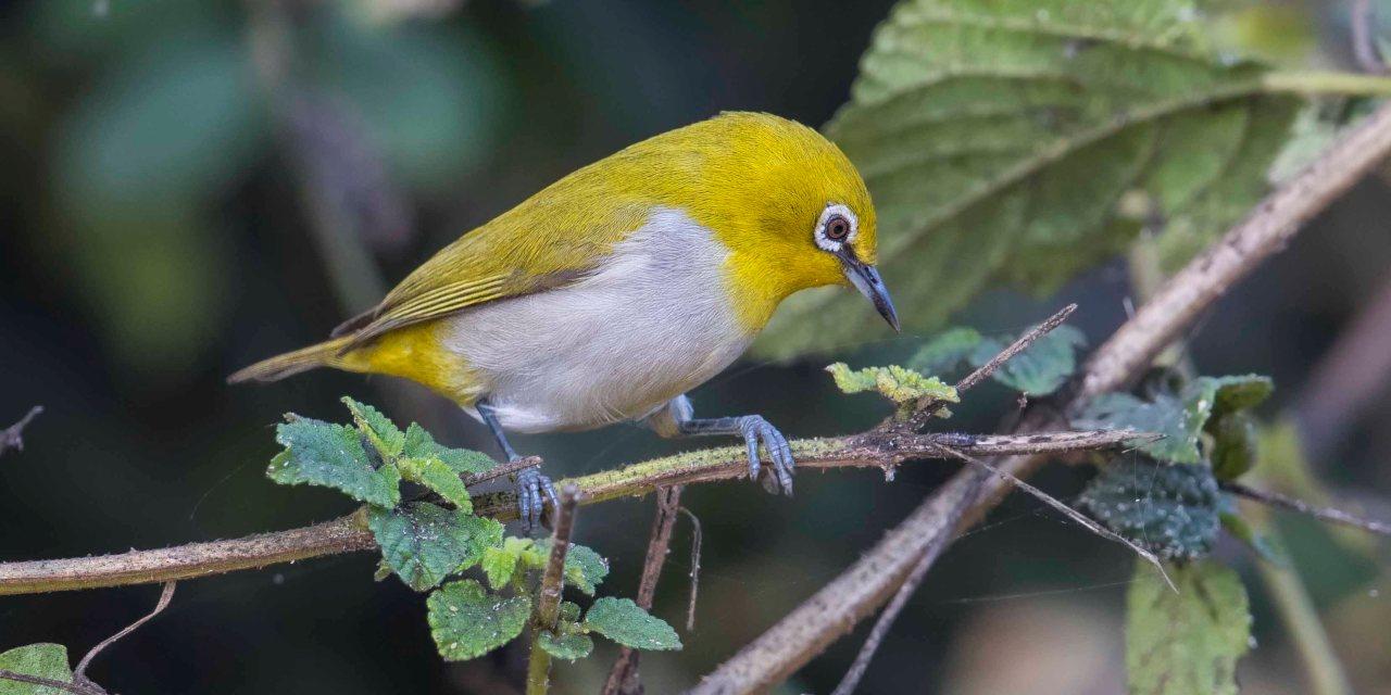 Trip report to Bharatpur Bird Sanctuary
