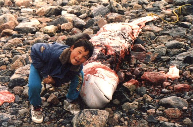 Billy Inukshuk with Beluga, Chesterfield Inlet, 1993