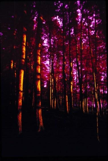 Woods IR 3