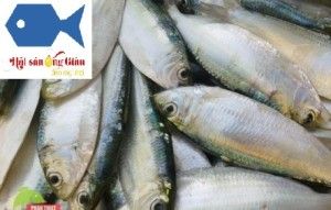 Buy fresh, dried herring in Vietnam where, dried herring export