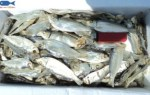 Specializing in selling cheap dried herring – premium quality.