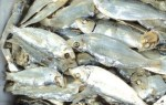 Professionals offers dried herring exports – Seafood Rich,where good prices in Vietnam.