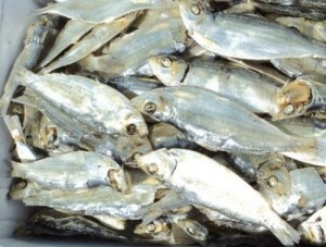 supplying dried herring exports