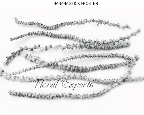 Bulk Banana Stem Frosted Wholesale Supplies