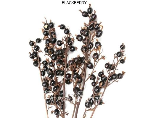 Black Berries Natural - Dried Black berries wholesale supply