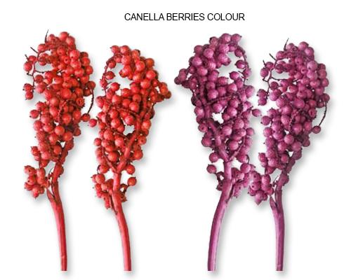 Canella Berries Colour - Bulk Canella Berries Supplies