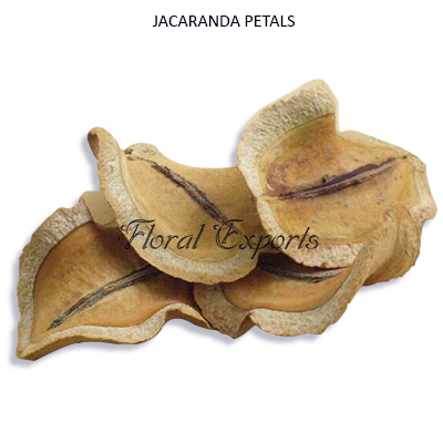 Jacaranda Petals Natural-Bulk Dried Potpourri Suppliers