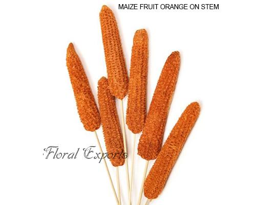 Maize Fruit Orange - Wholesale Maize Fruit Purple Supplies