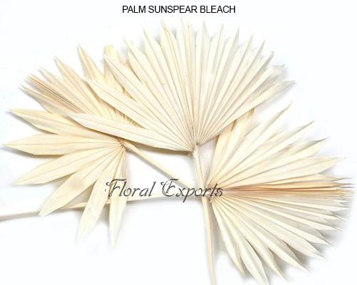 Palm Sun Spear Bleach