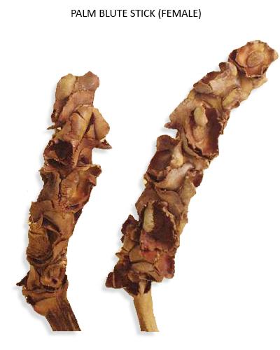 Palm Blute Stick (Female) Natural